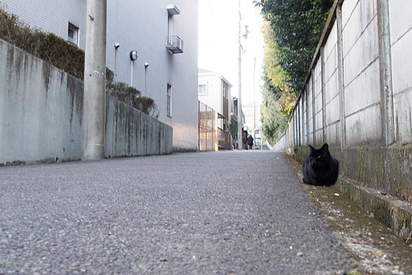 塀際の黒猫