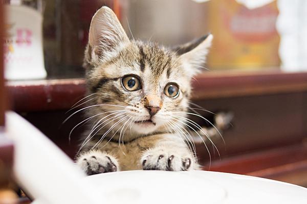 ポットと小猫