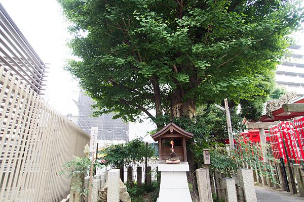 泥江縣神社イチョウの御神木を祀る