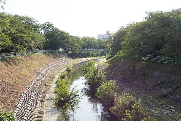 香流川とウスバキトンボ