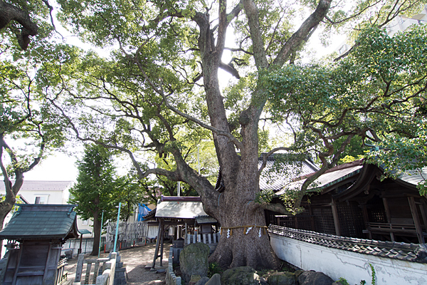 田光八幡社裏から見る風景