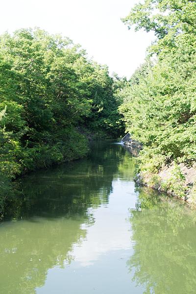 小幡緑地の池風景