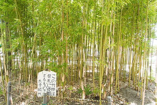 烏森八幡社竹林