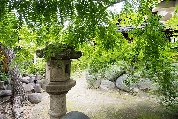 東起白山社灯籠と木の葉