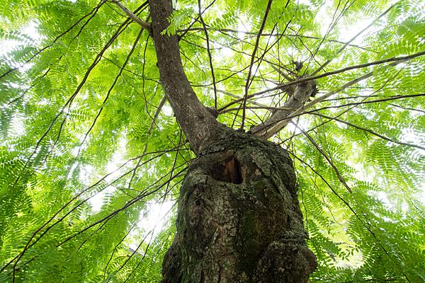 東起白山社境内の木