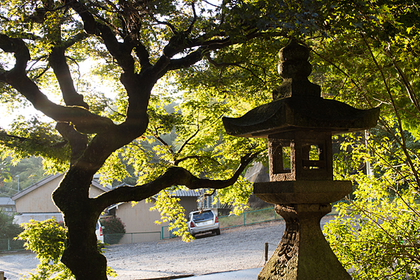 内々神社灯籠と木々と西日