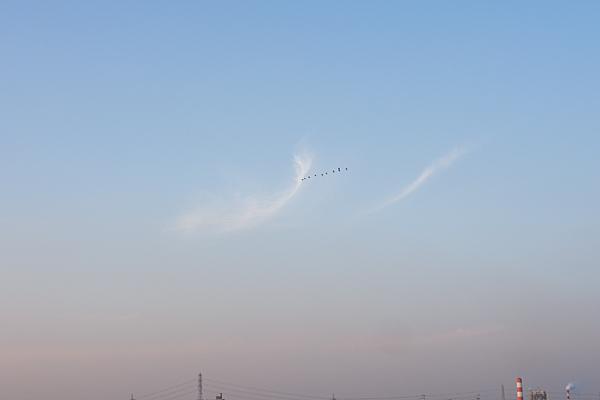 空をいく鳥の群れ