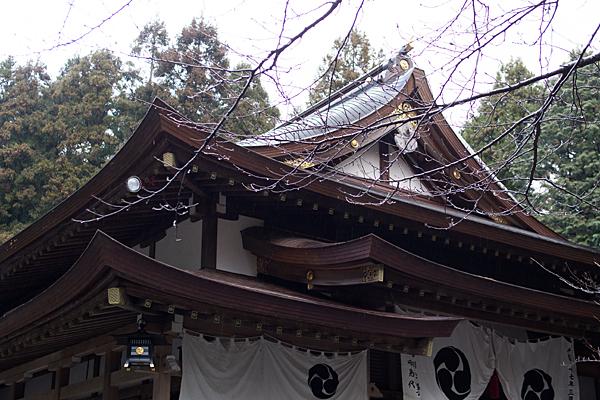 椿大神社行満堂と雨に濡れる桜の木