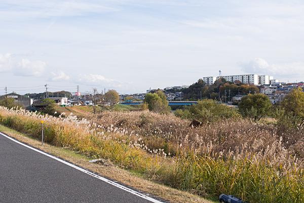 矢田川冬枯れ風景