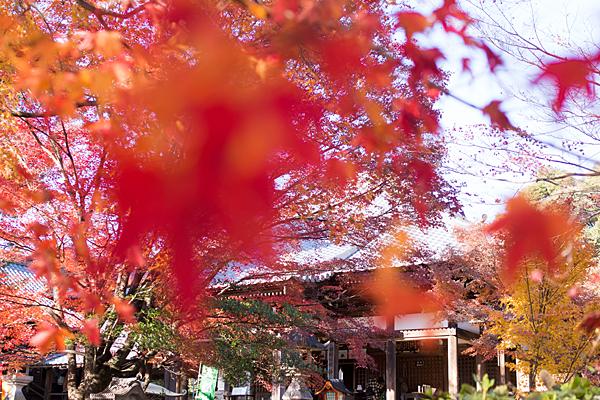 寂光院本堂と紅葉