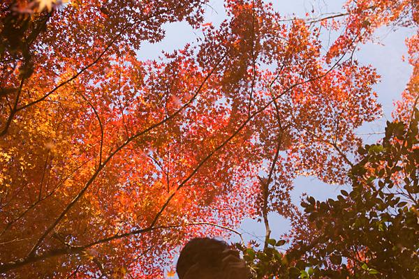 有楽苑水面に映る紅葉