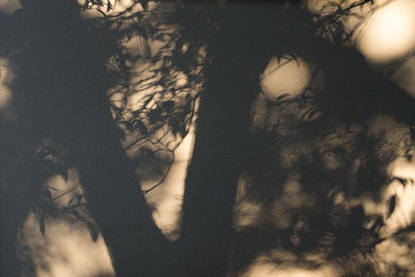 有楽苑壁に映る木々の影