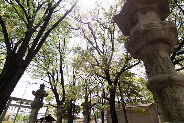 熊野社境内の木々