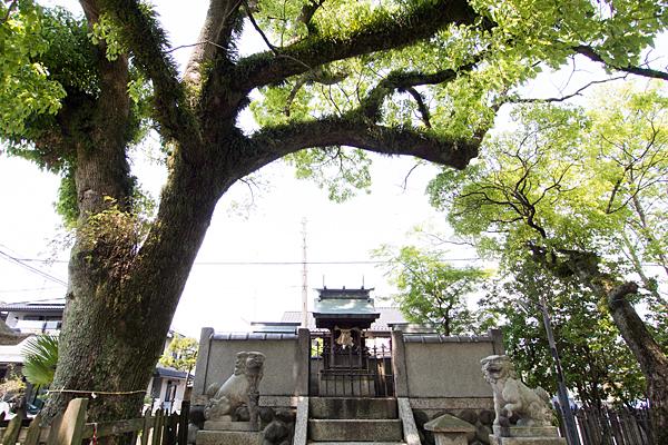 春日神社御神木と本殿と狛犬