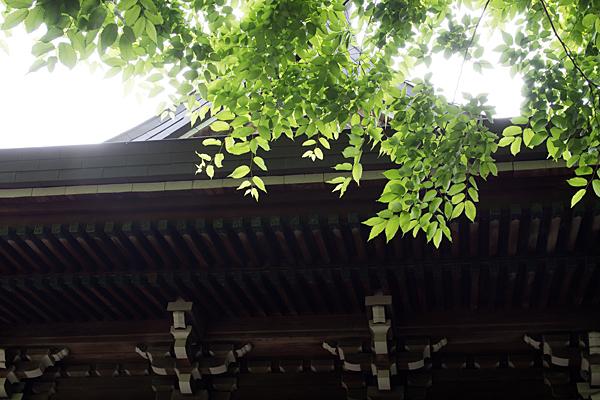 明神社社殿と青葉