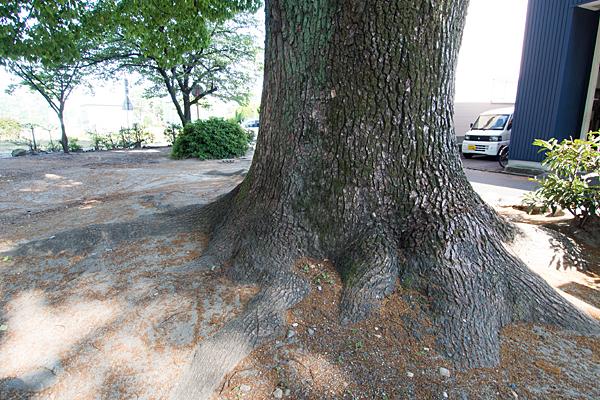 八家町神明社保存樹
