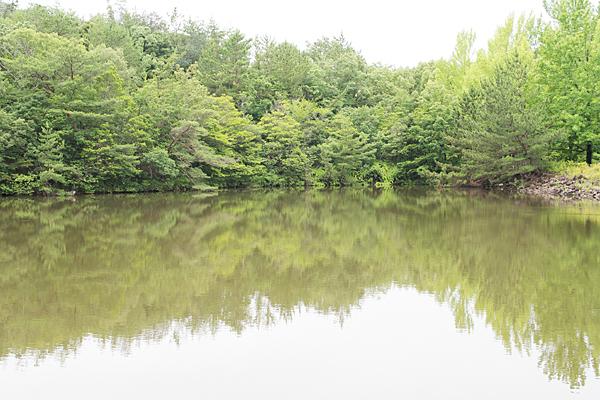 モリコロかえで池
