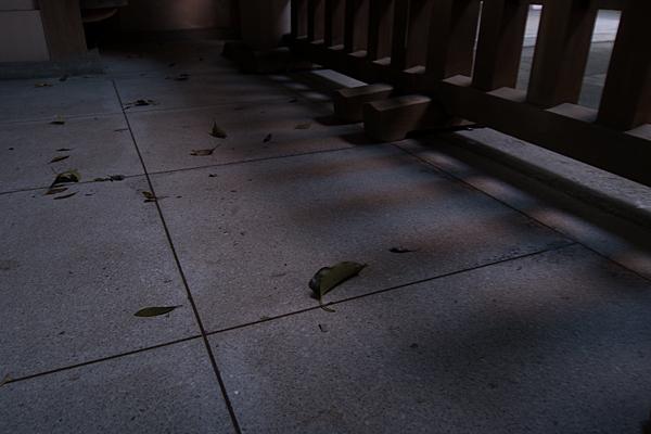 真清田神社夕方の光と影