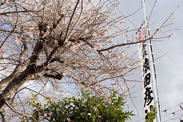 尾張猿田彦神社冬桜