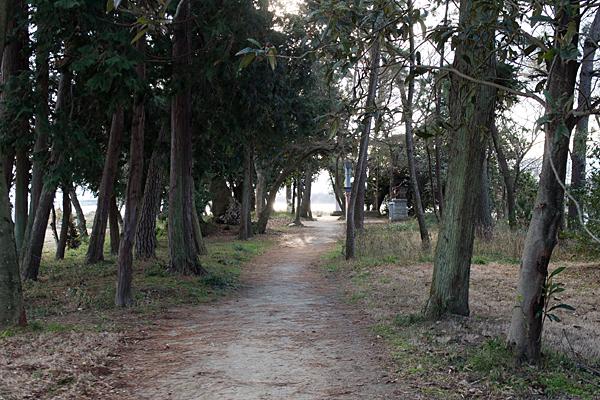 尾張猿田彦神社奥宮の松林