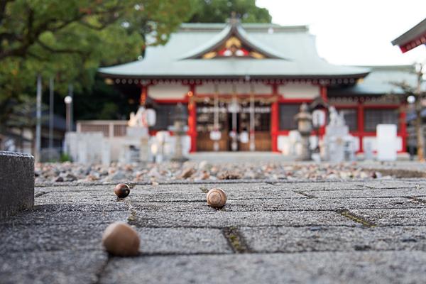 生玉稲荷神社境内のどんぐりと拝殿