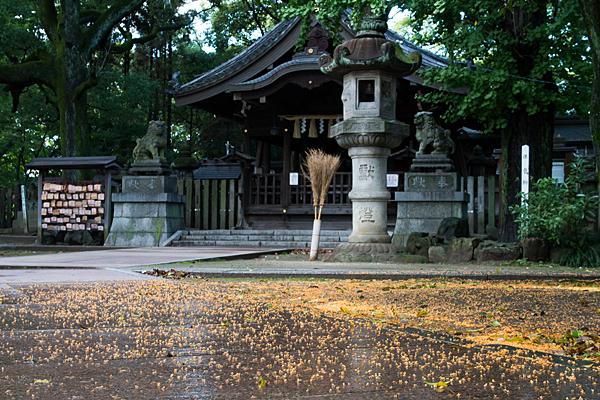 片山神社キンモクセイの花絨毯
