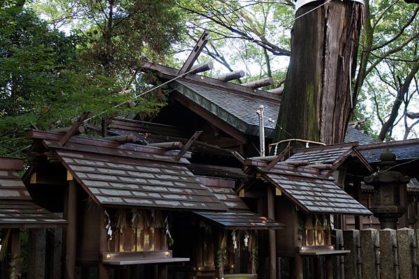 片山神社境内社と本殿と天狗杉
