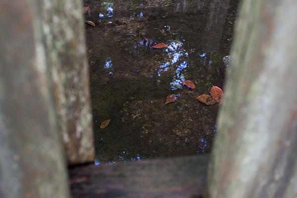 片山神社水たまりと落ち葉