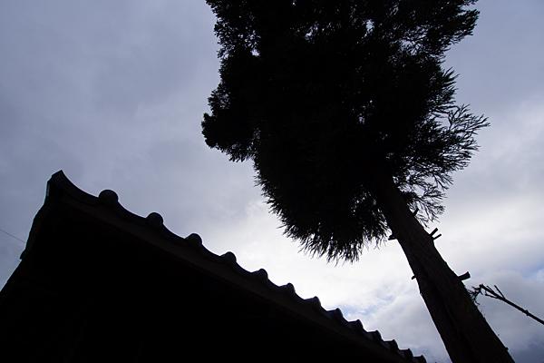 供米田不明社境内の杉と覆殿
