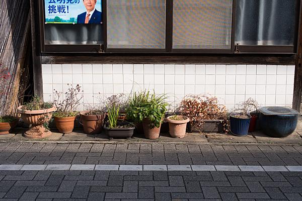 犬山城下植木