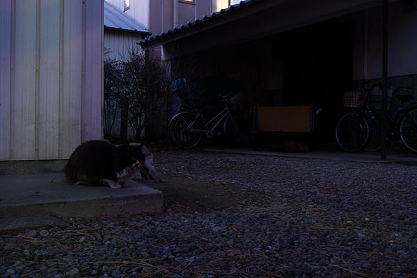真清田神社境内の猫
