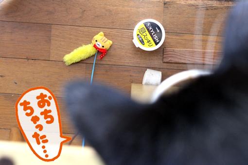 ぷっちゃんが遊んでる。