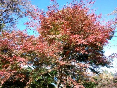 弘法山公園07