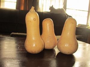Peanut kabocha (2)