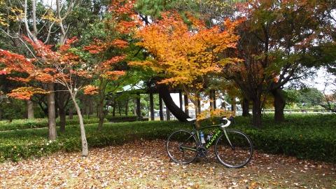 園内は紅葉が綺麗でした。