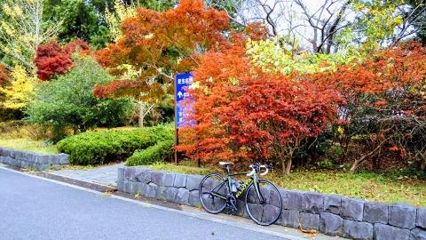 葛西臨海公園の紅葉とユリー