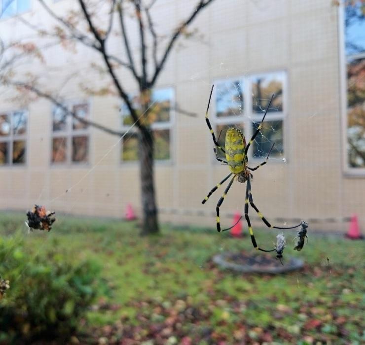 171027蜘蛛