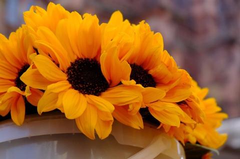 10月の向日葵 (120)