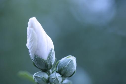 10月の向日葵 (118)