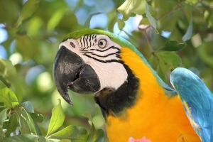 bird-1817579__340.jpg