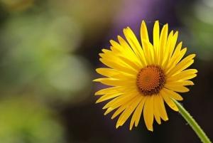 flower-2254866__340.jpg