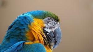 macaw-1416397__340.jpg