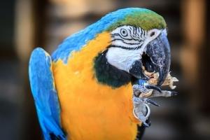 macaw-2656711__340.jpg