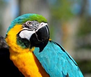 macaw-2868308__340.jpg