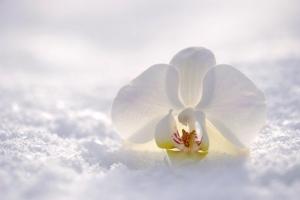 orchid-2952074__340.jpg