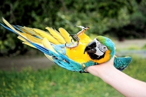 parrot-2522892__340.jpg