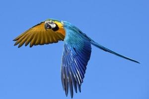 parrot-2796766__340.jpg