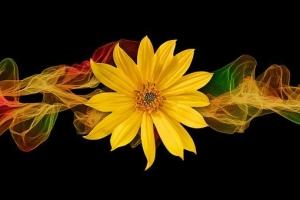 sun-flower-2238289__340.jpg