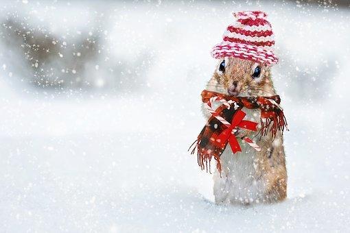 独りぼっちのクリスマス・12
