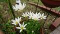20170920白の花